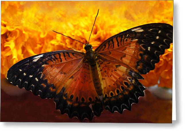 Sunflower Greeting Cards - Orange And Black Butterfly Greeting Card by Sheela Ajith
