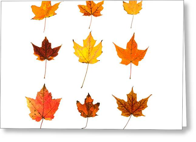Norway Maple Greeting Cards - Orange and Yellow Autumn Leaves Greeting Card by Jennifer Booher
