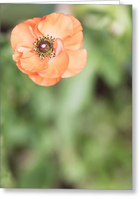 Flower Center Greeting Cards - Orange Anemone Center Greeting Card by Rebecca Cozart
