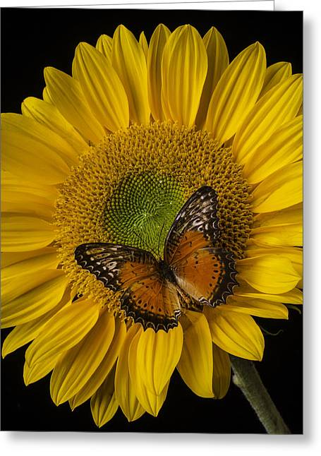 Antenna Greeting Cards - Orange Butterfly On Sunflower Greeting Card by Garry Gay