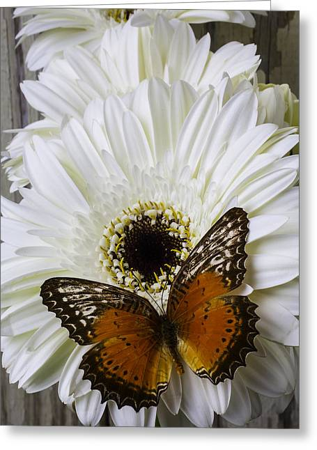 Orange Butterfly On White Daisy Greeting Card by Garry Gay
