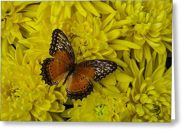 Mum Greeting Cards - Orange Butterfly On Yellow Mums Greeting Card by Garry Gay
