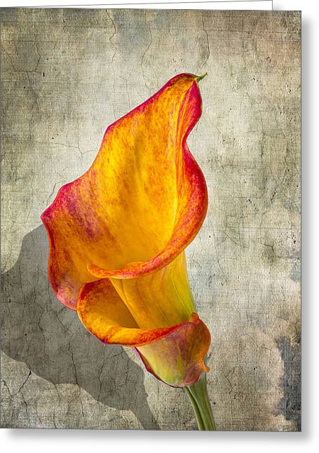 Glass Bottle Greeting Cards - Orange Calla lily Greeting Card by Garry Gay