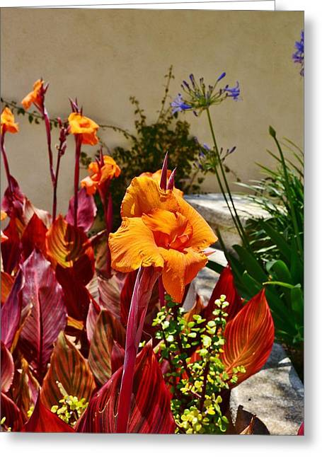 Canna Greeting Cards - Orange Canna Lilies  Greeting Card by Linda Brody