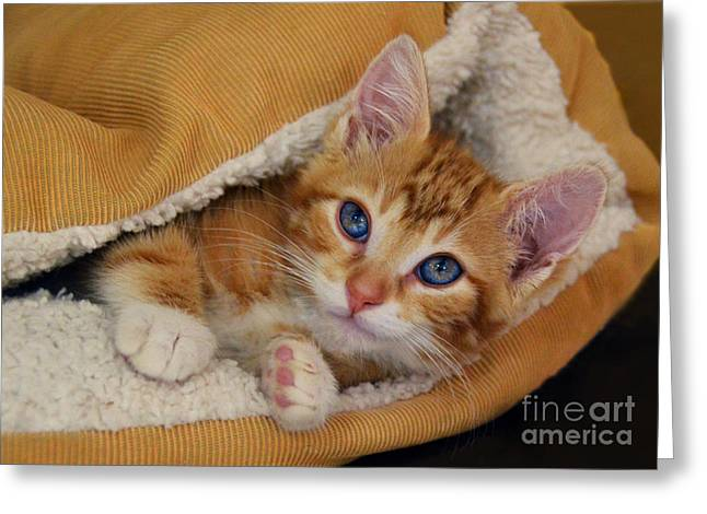 Catherine White Greeting Cards - Orange Kitten Tucked Into Bed Greeting Card by Catherine Sherman