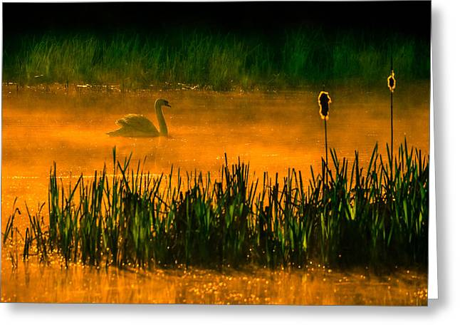 Swans... Greeting Cards - Orange Crush 2 Greeting Card by Brian Stevens