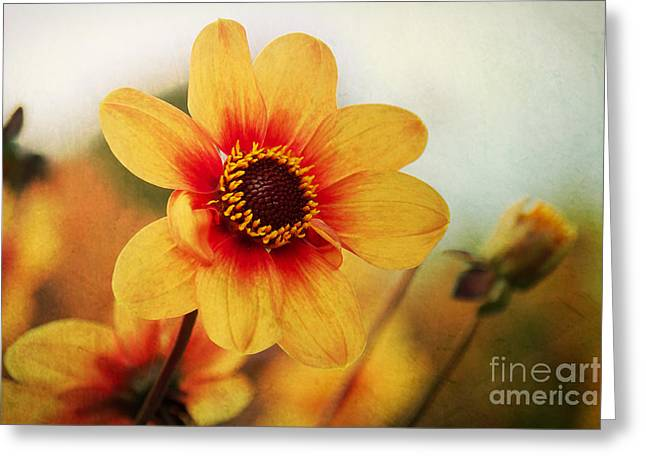 Angela Doelling Ad Design Photo And Photoart Greeting Cards - Orange Dahlia  Greeting Card by Angela Doelling AD DESIGN Photo and PhotoArt