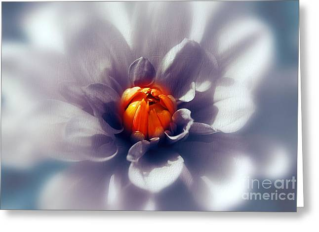 Border Greeting Cards - Orange dahlia Greeting Card by SK Pfphotography