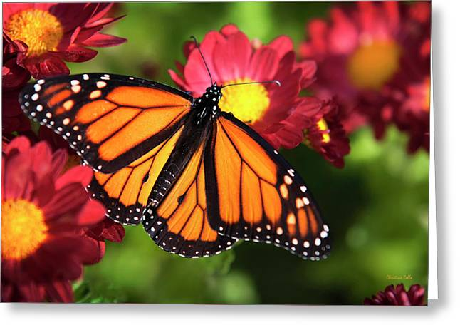 Orange Drift Monarch Butterfly Greeting Card by Christina Rollo