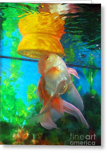 Oranda Greeting Cards - Orange Float Greeting Card by Joy Tudor