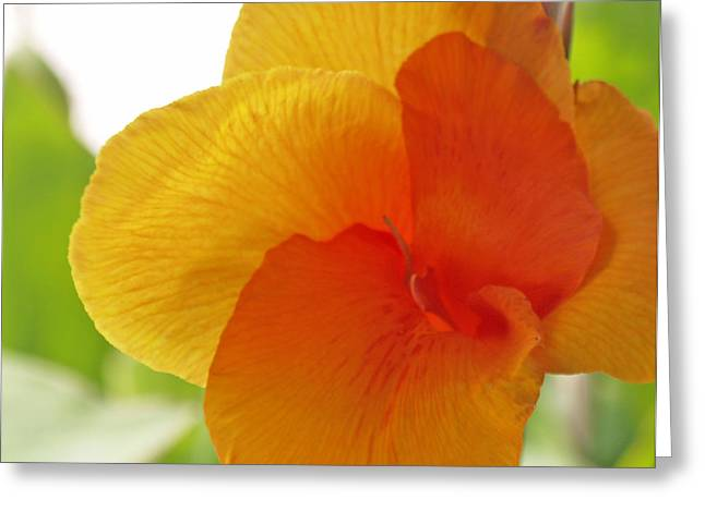 Canna Greeting Cards - Orange Flower Greeting Card by James Granberry