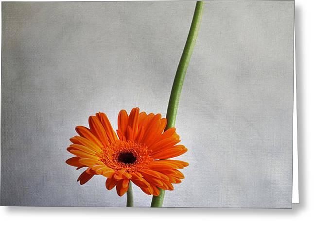 Texture Floral Greeting Cards - Orange gernera Greeting Card by Bernard Jaubert