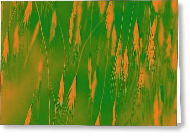 Orange Grass Spikes Greeting Card by Heiko Koehrer-Wagner