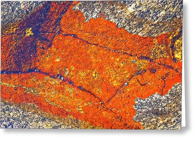 Lichen Greeting Cards - Orange lichen Greeting Card by Heiko Koehrer-Wagner