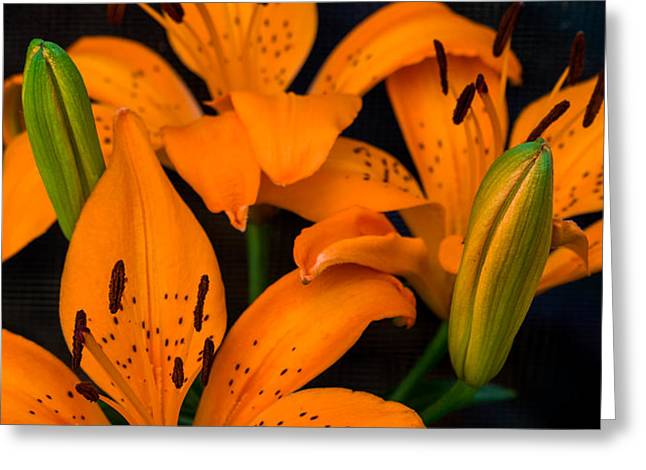 Day Lilly Greeting Cards - Orange Lilies Greeting Card by Ed Gleichman