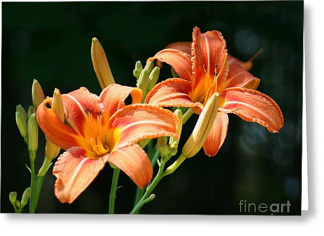 Day Lilly Greeting Cards - Orange Lillies Greeting Card by Sandra  Huston
