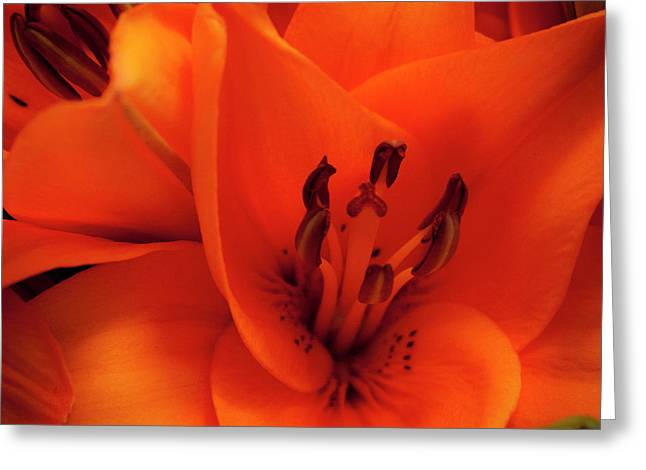 Orange Lily Greeting Card by David Patterson