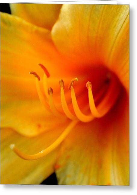 Orange Florals Greeting Cards - Orange Marmalade 2 Greeting Card by David Dunham