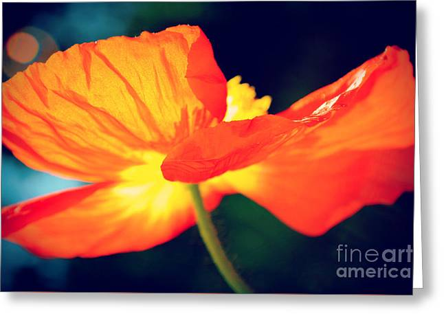 Color Enhanced Greeting Cards - Orange Poppin Poppy 2 Greeting Card by Kelly Nowak