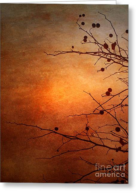 Orange Simplicity Greeting Card by Tara Turner