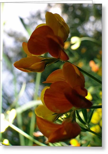 Orange Wildflower Greeting Cards - Orange Wildflower Greeting Card by Liz Vernand