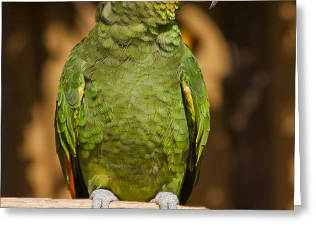 Orange-winged Amazon Parrot Greeting Card by Adam Romanowicz