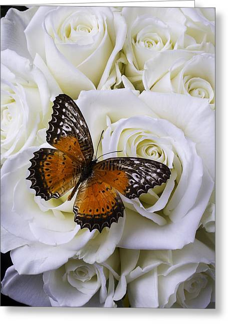 White Photographs Greeting Cards - Orange Winged Butterfly On White Roses Greeting Card by Garry Gay
