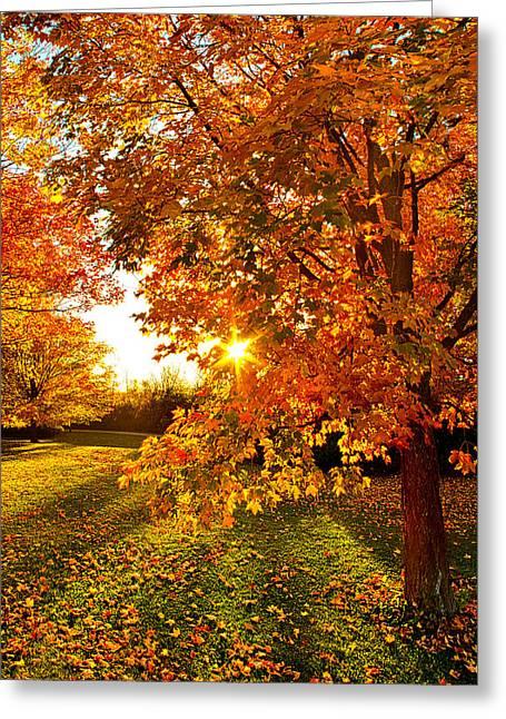 Orange You Glad Greeting Card by Phil Koch
