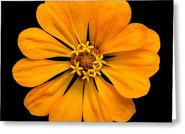 Greeting Cards - Orange Zinnia Greeting Card by Jim Hughes