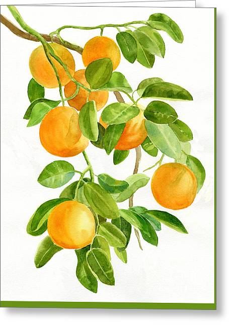Citrus Leaf Greeting Cards - Oranges on a Branch Greeting Card by Sharon Freeman