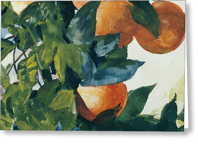 Oranges on a Branch Greeting Card by Winslow Homer