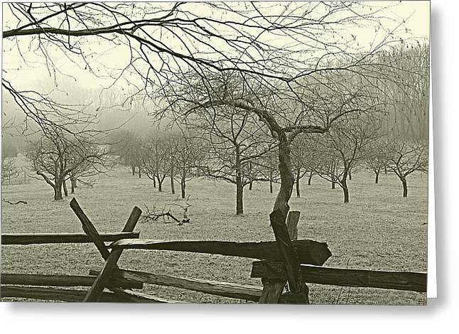 Fruit Tree Art Greeting Cards - Orchard and Fence in Fog Greeting Card by John Hoesly