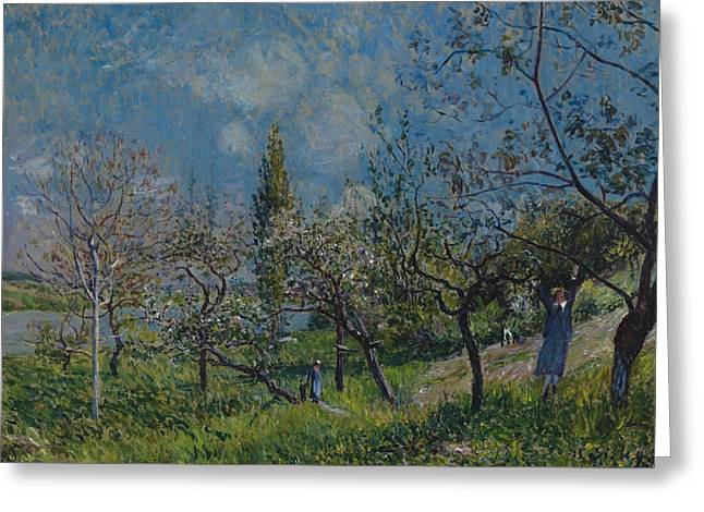 Orchard In Spring Greeting Card by Alfred Sisley