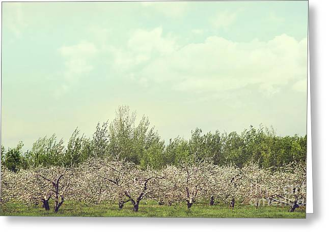 Apple Tree Greeting Cards - Orchard of apple blossoming tees Greeting Card by Sandra Cunningham