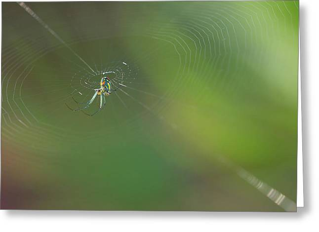 Wild Orchards Greeting Cards - Orchard Orbweaver #3 Greeting Card by Paul Rebmann