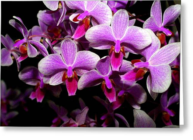 Orchid 12 Greeting Card by Marty Koch