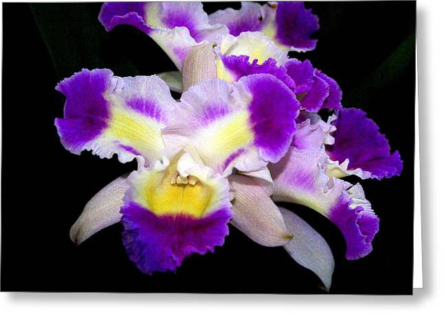 Orchid 13 Greeting Card by Marty Koch