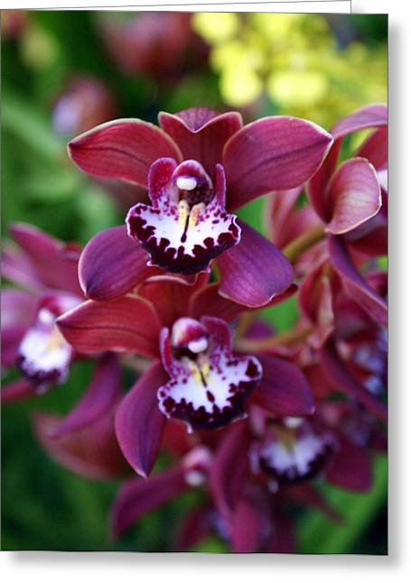Orchid 20 Greeting Card by Marty Koch