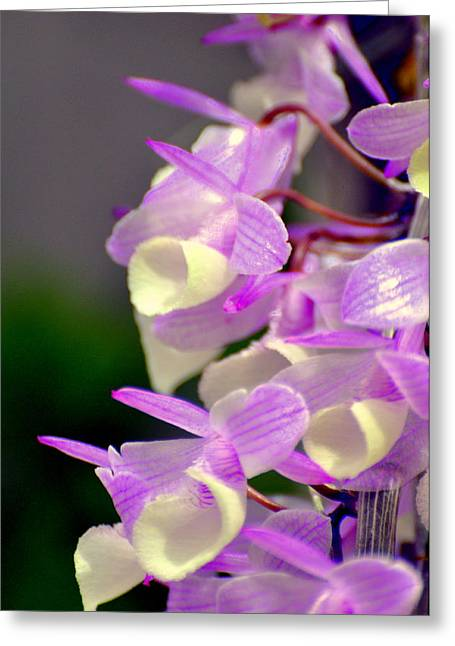 Orchid 25 Greeting Card by Marty Koch