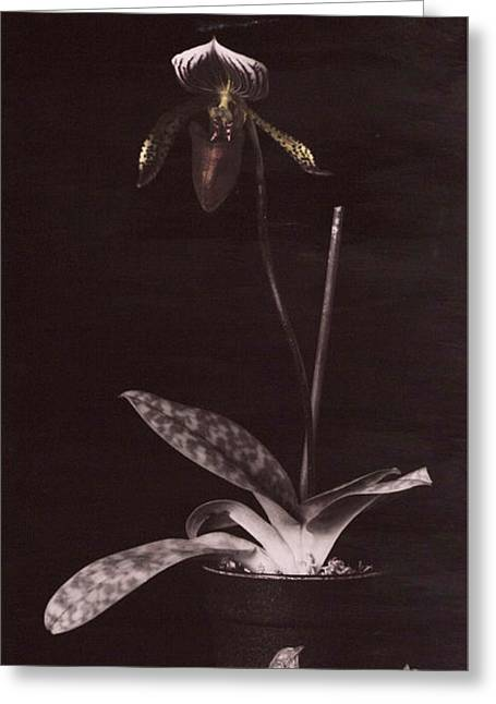 Red Green Black Pyrography Greeting Cards - Orchid 3 Greeting Card by Esther Osborn