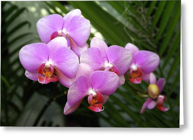 Orchid 4 Greeting Card by Marty Koch