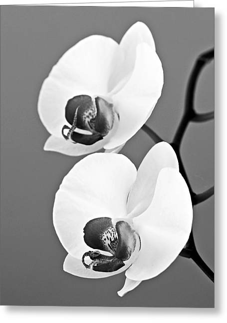 orchid-4- St Lucia Greeting Card by Chester Williams