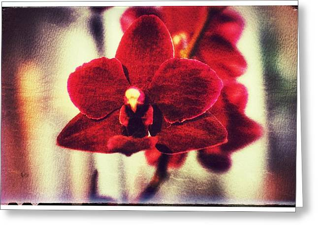 Orchid Alone Greeting Card by Isabella Abbie Shores