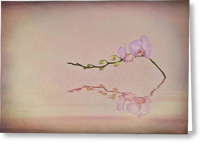 Orchid Blooms And Buds Greeting Card by Tom Mc Nemar