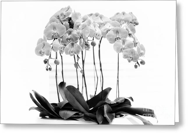 Orchid Butterfly Flowers Greeting Card by Charline Xia