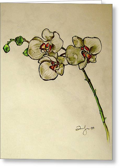 Single Drawings Greeting Cards - Orchid Greeting Card by Emily Jones