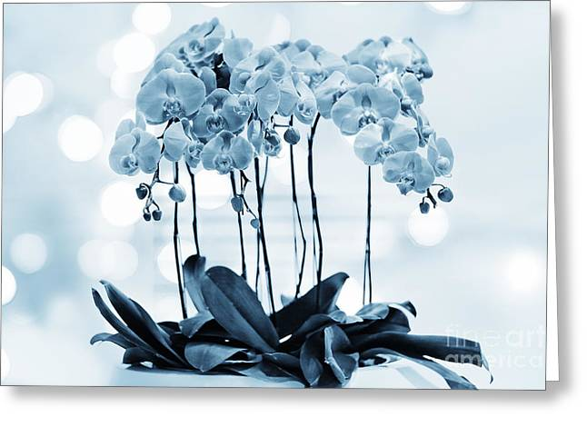 Orchid Flowers Blue Tone Greeting Card by Charline Xia