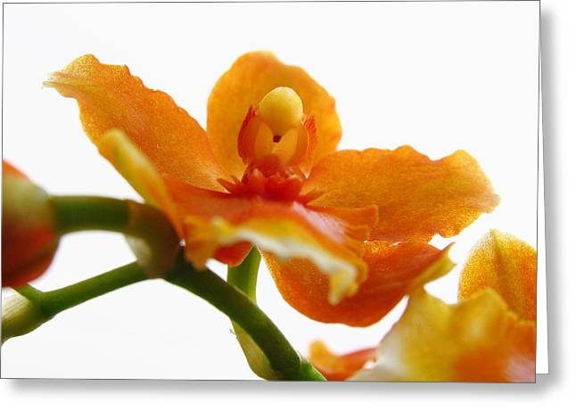 Orchid Artwork Greeting Cards - Orchid Greeting Card by Juergen Roth