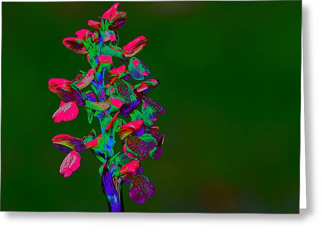 Orchid Greeting Card by Richard Patmore