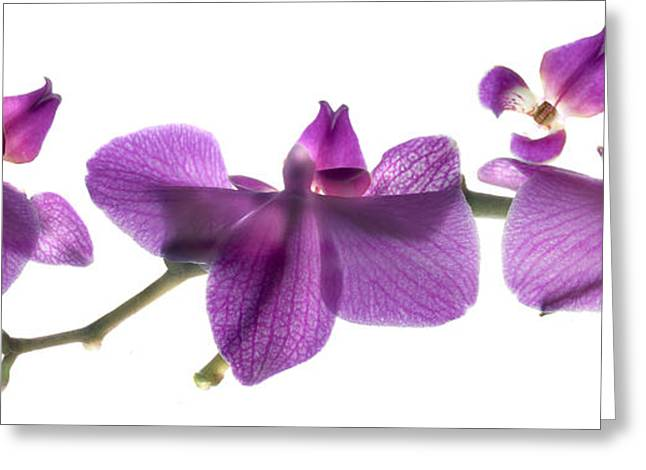 Orchid Row Greeting Card by Julia McLemore